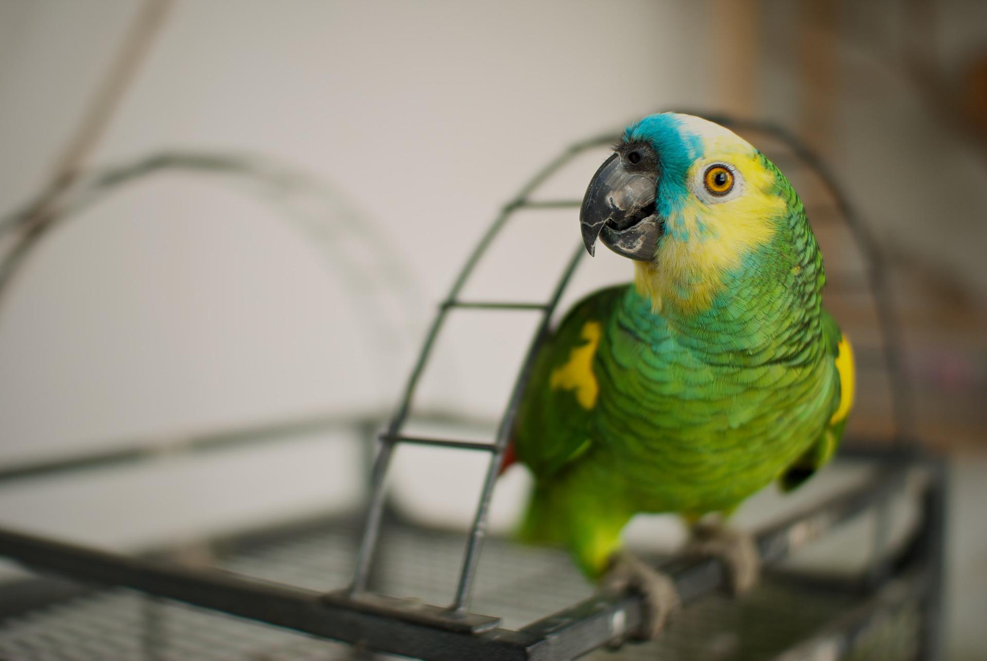 Mit einer Tierarztpraxis selbständig machen